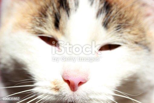543560840 istock photo Cute Cat 696635852
