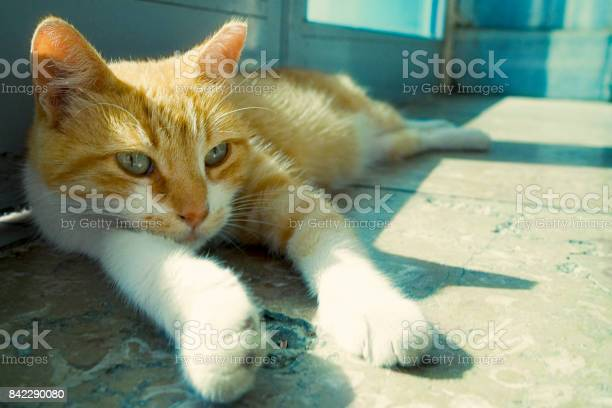 Cute cat picture id842290080?b=1&k=6&m=842290080&s=612x612&h=iyeyrhnmpq0h8fggo x531vinhy cnoxfjpui4a91aq=