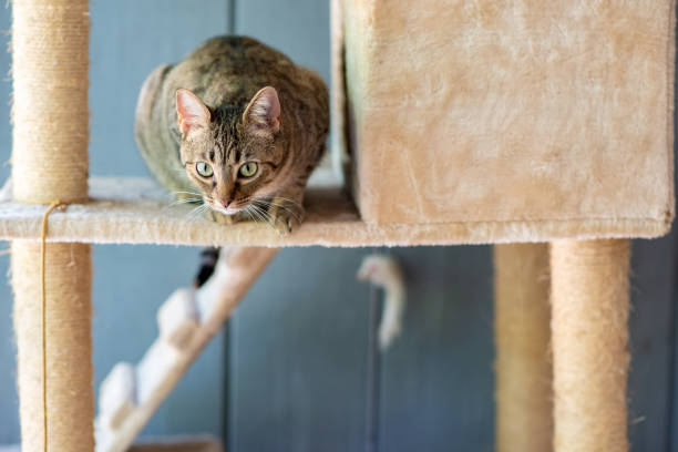 Cute cat playing on a tower stock photo