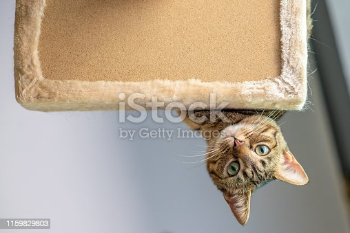 istock Cute cat playing on a tower 1159829803