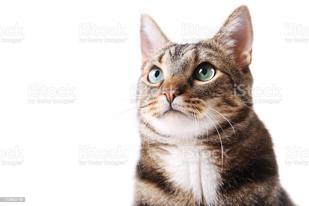 Cute cat portrait royalty-free stock photo