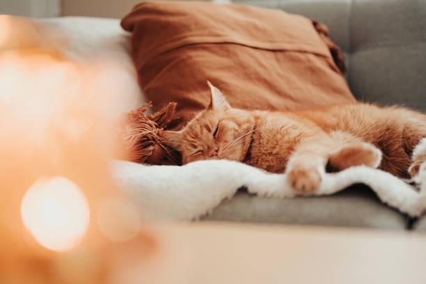 Lindo gato relajante en el sofá en la luz de la vela acogedor hogar - foto de stock