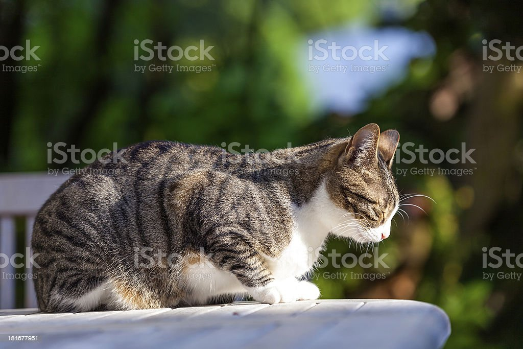 cute cat relaxing on a wooden table in the garden royalty-free stock photo