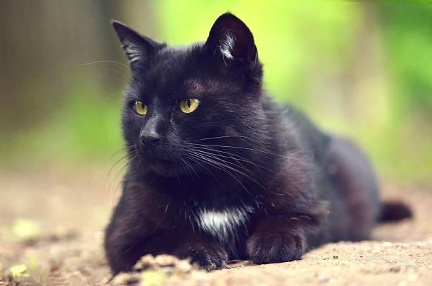 Cute cat relaxing on the grass picture id670526512?b=1&k=6&m=670526512&s=612x612&w=0&h=ekfd0wjfj2y67aq k2t477zwvribae3gcuycetqpf9s=