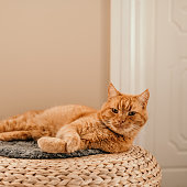 Cute cat resting indoors at home\nGinger cat. Photo taken indoors in natural sunlight.