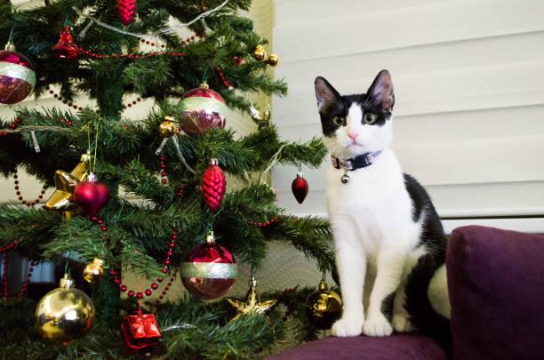 Cute cat sitting close to christmas tree picture id925541952?b=1&k=6&m=925541952&s=612x612&w=0&h=zwkurpsbyqyocczup35lpubf9o9xkwjpxtiaaioyj6i=