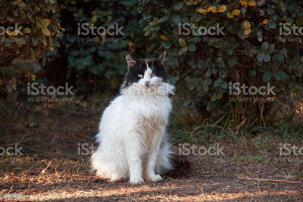 Cute cat sitting on a stone wall. stock photo