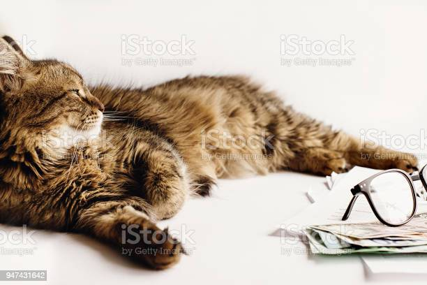 Cute cat sitting on table with glasses phone and money working home picture id947431642?b=1&k=6&m=947431642&s=612x612&h=jqfacxyhinhqzlxxjztdct02obnhbiqhjsctmk0utya=