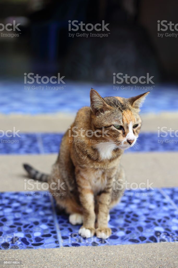 Cute cat sitting royalty-free stock photo