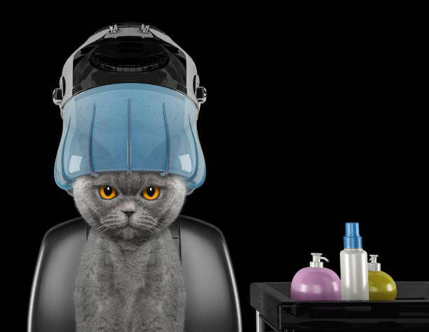 Cute cat sitting under the drying hood in salon -- isolated on black stock photo