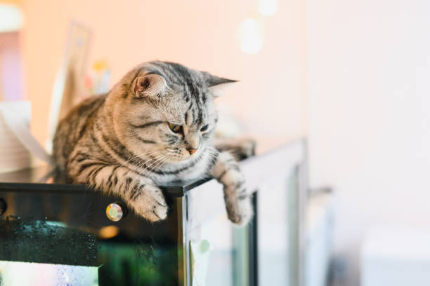 Cute cat sleep on freezer in cat cafe picture id1176782296?b=1&k=6&m=1176782296&s=612x612&w=0&h=gg n0m7mslk2jb 7tdb7eegg6d7bvasizh1wgiiusno=