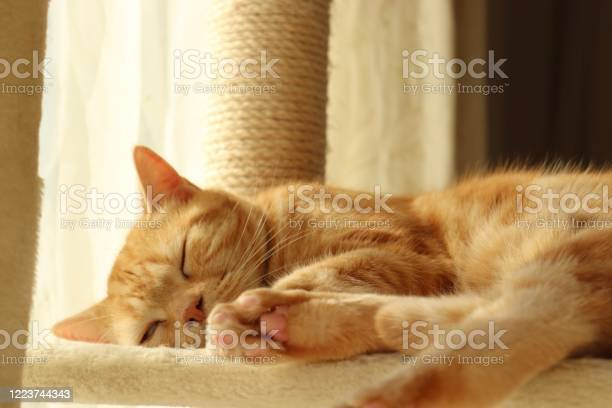 Cute cat sleeping in the sunshine picture id1223744343?b=1&k=6&m=1223744343&s=612x612&h=a urordjhly5fuc59zo3iw8xsks7rghpjnellwelc48=