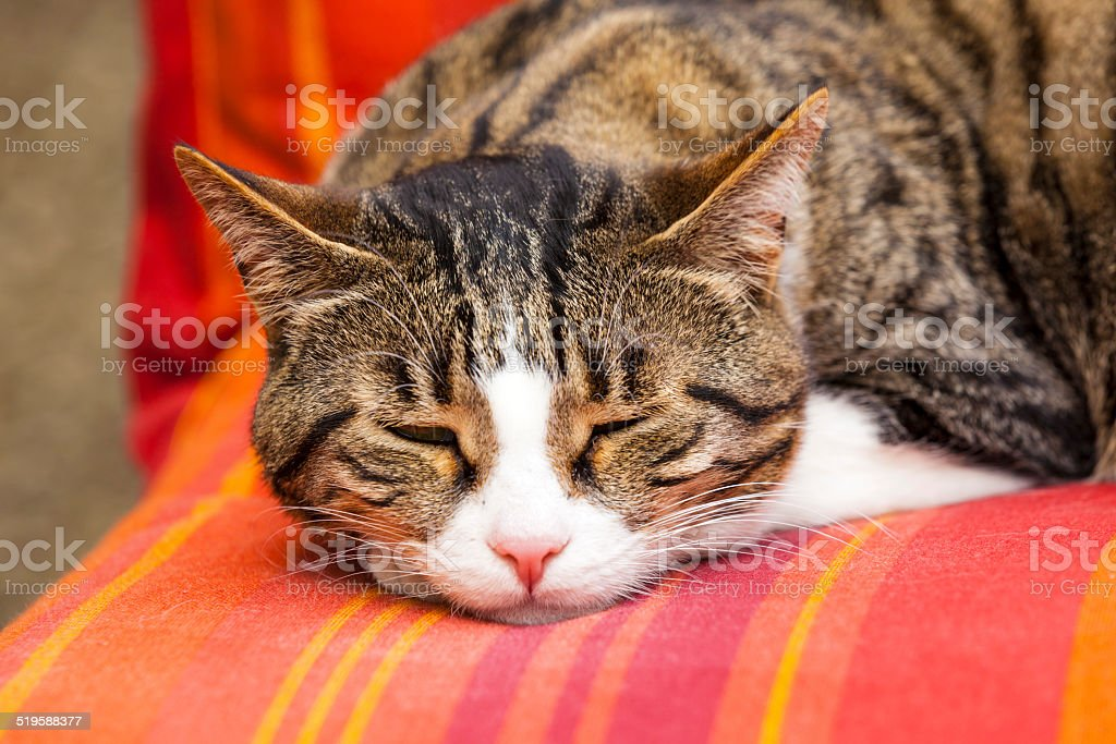 cute cat sleeping on a couch stock photo