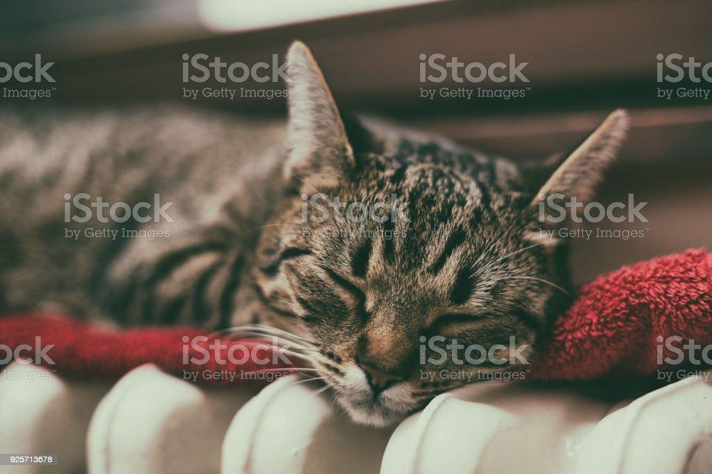 Niedliche Katze schläft auf Heizkörper – Foto