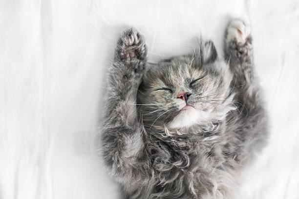 Cute cat sleeping on the bed picture id494972934?b=1&k=6&m=494972934&s=612x612&w=0&h=pu8w0hv yrme xhsgeruobsc1t48iahyvopnug2sycq=