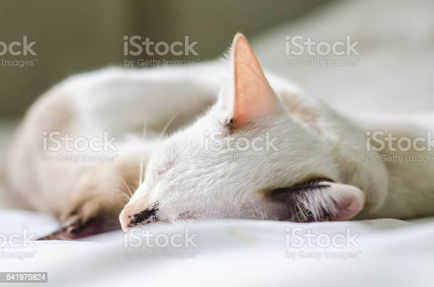 Cute cat sleeping on the couch soft focus image picture id541975824?b=1&k=6&m=541975824&s=612x612&h=mjtqwwbl1hkmf0brbydlyqvnmpsv10nqttnxb6axx78=