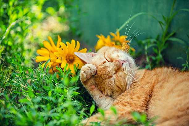 Cute cat sleeping on the grass with flowers picture id544475344?b=1&k=6&m=544475344&s=612x612&w=0&h=ia9orv21p9ra1vylw cw0bteahddjk6a4y4c9vtxauy=