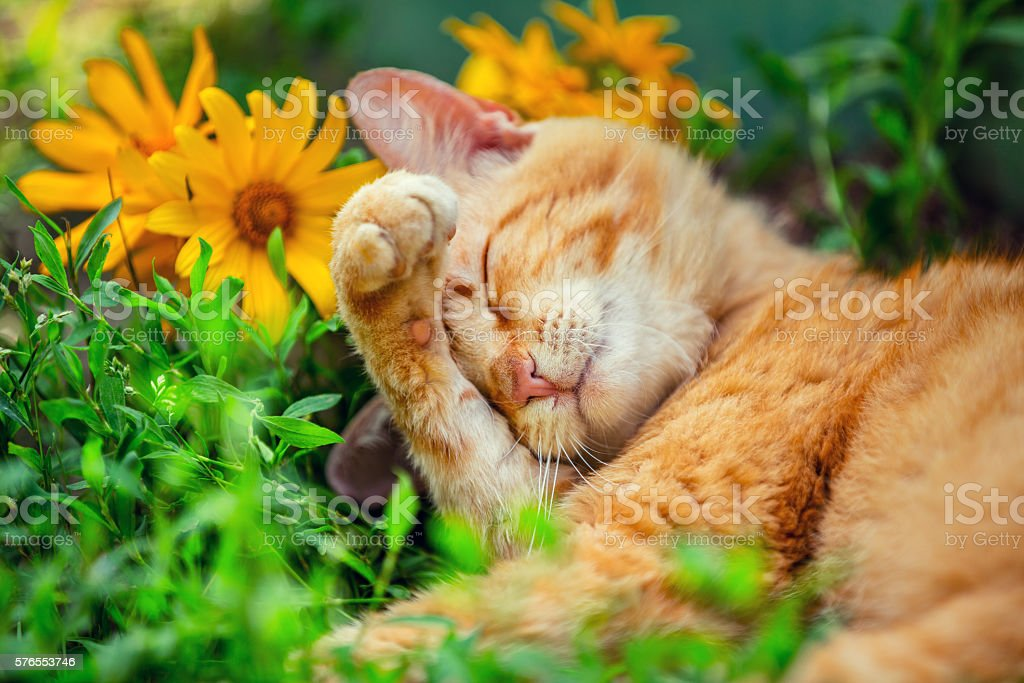 Cute cat sleeping on the grass with flowers – Foto