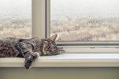 istock Cute cat sleeping 854190988