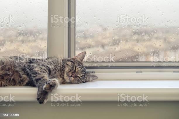 Cute cat sleeping picture id854190988?b=1&k=6&m=854190988&s=612x612&h=n mvhk9qhzlkwh9kvrq0m3xwvexehgxvda y7zlzwac=