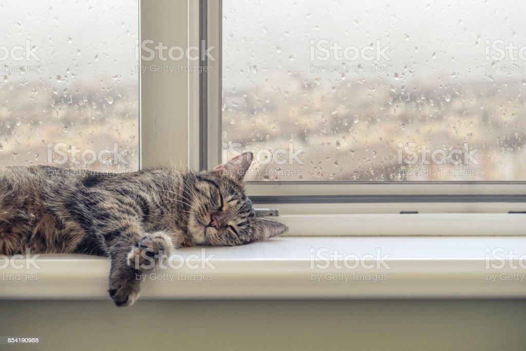 Cute cat sleeping stock photo