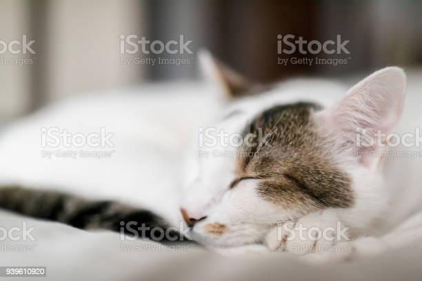 Cute cat sleeping with one nail out picture id939610920?b=1&k=6&m=939610920&s=612x612&h=ohnuzd8yskq30sva3pgujz9ivijr2drmpkvywibcfna=