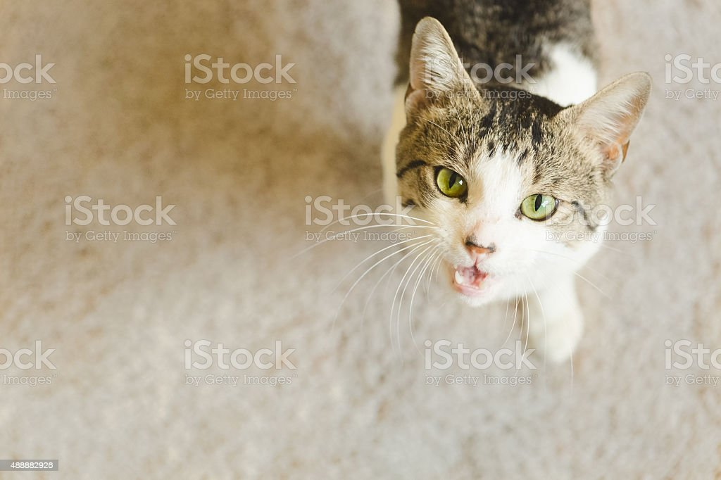 Cute Cat Talking to You stock photo
