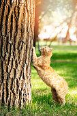 Cute cat under sunshine at park