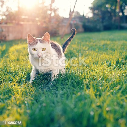 Cute cat under sunshine at park