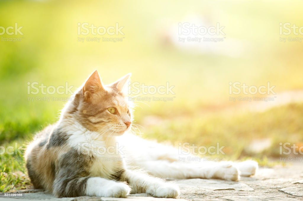 Cute cat under sunshine at park stock photo