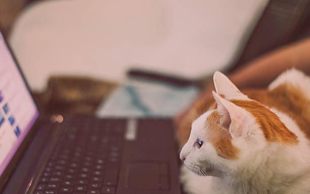 Cute cat watching movie on laptop animals and technology picture id472605046?b=1&k=6&m=472605046&s=612x612&w=0&h=dj4ofssu0szurxdf6u1o8jb1emzl4u4e2aicljmjekg=