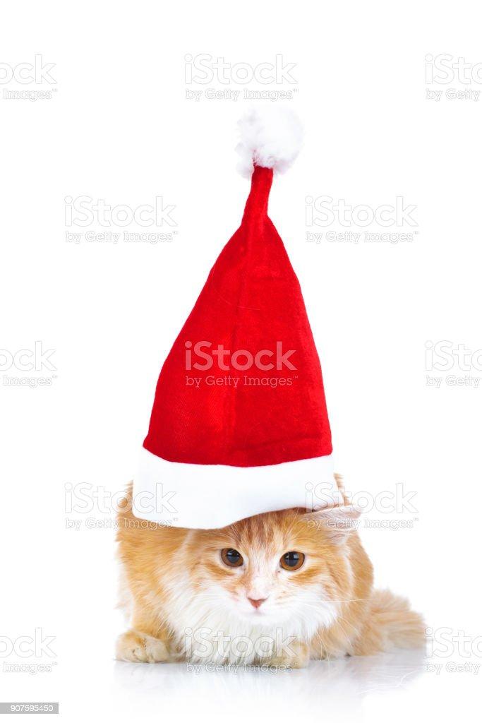 cute cat wearing a big santa claus hat stock photo