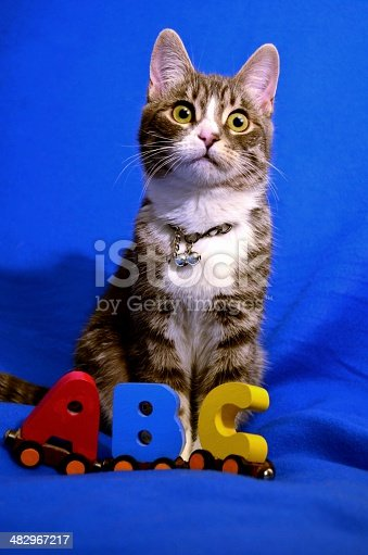 Kitten and the ABC letters