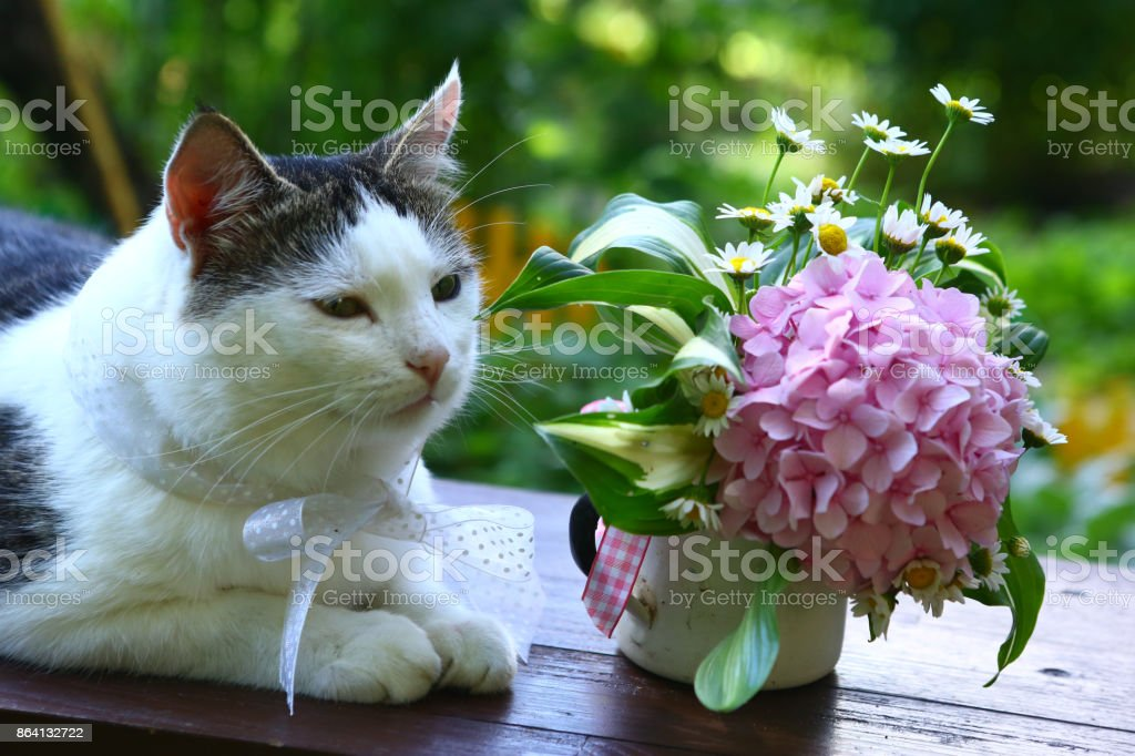 cute cat with bow and hydrangea pink flowers bouquet royalty-free stock photo