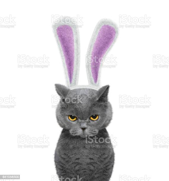 Cute cat with bunny ears isolated on white picture id641058300?b=1&k=6&m=641058300&s=612x612&h=ld2fjewotfjta5romz7yfg7hta y 384i95cbbptg2o=
