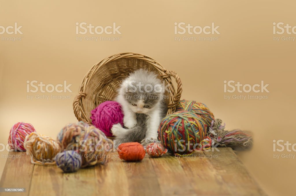 Cute kitten on light background. Cute little kitten. Baby cat playing...