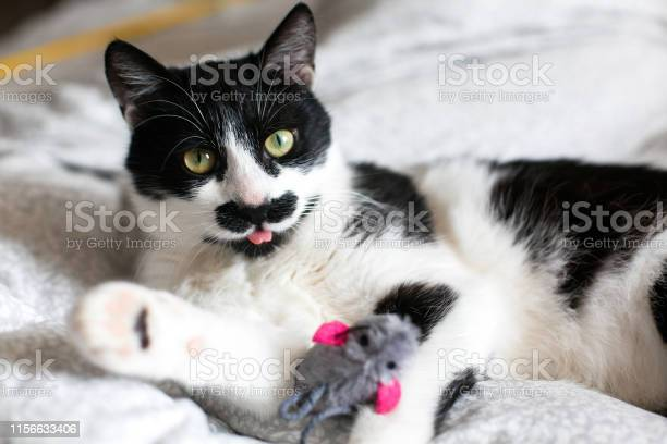 Cute cat with moustache showing tongue and playing with mouse toy on picture id1156633406?b=1&k=6&m=1156633406&s=612x612&h=mxd9txo9hch2 n1fglutdldabsp7kk3afwucfzdpkza=