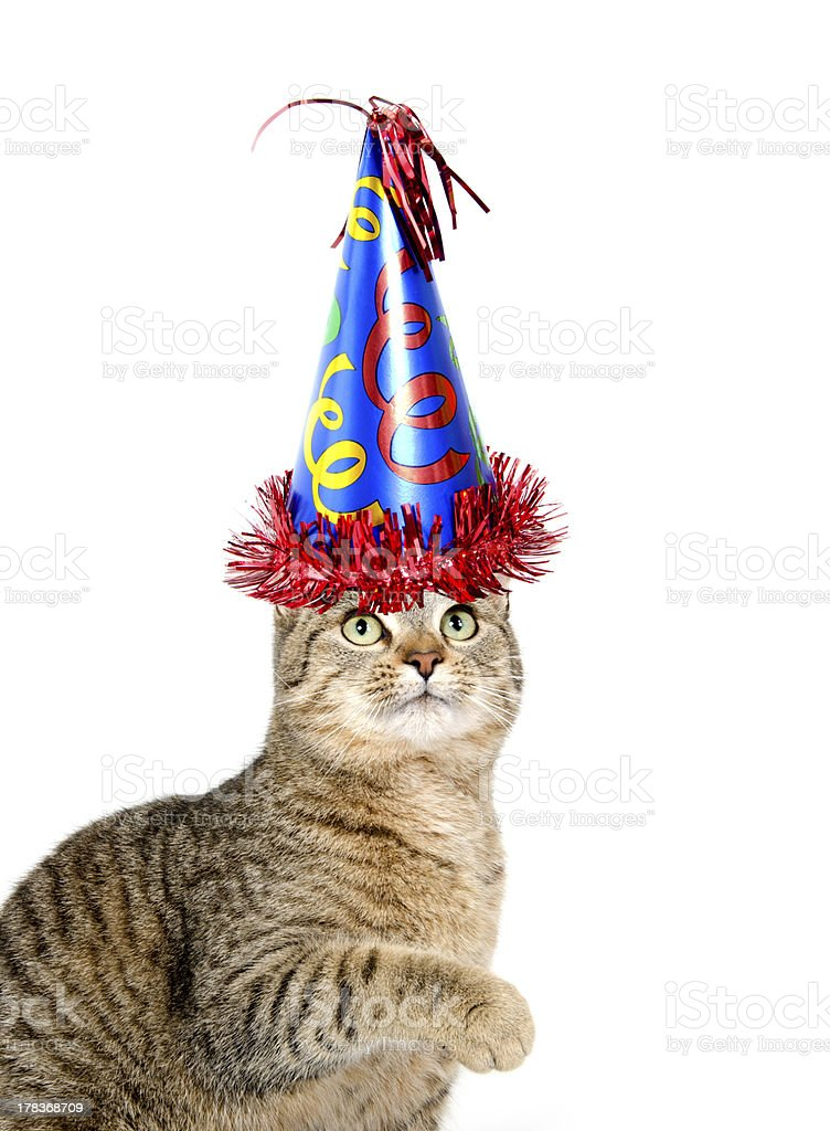 Cute Cat With Party Hat On White Background Royalty Free Stock Photo