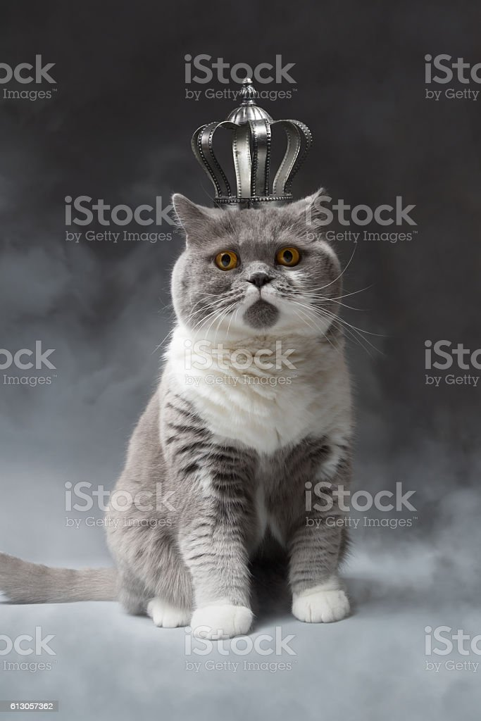 cute cat with silver Crown stock photo