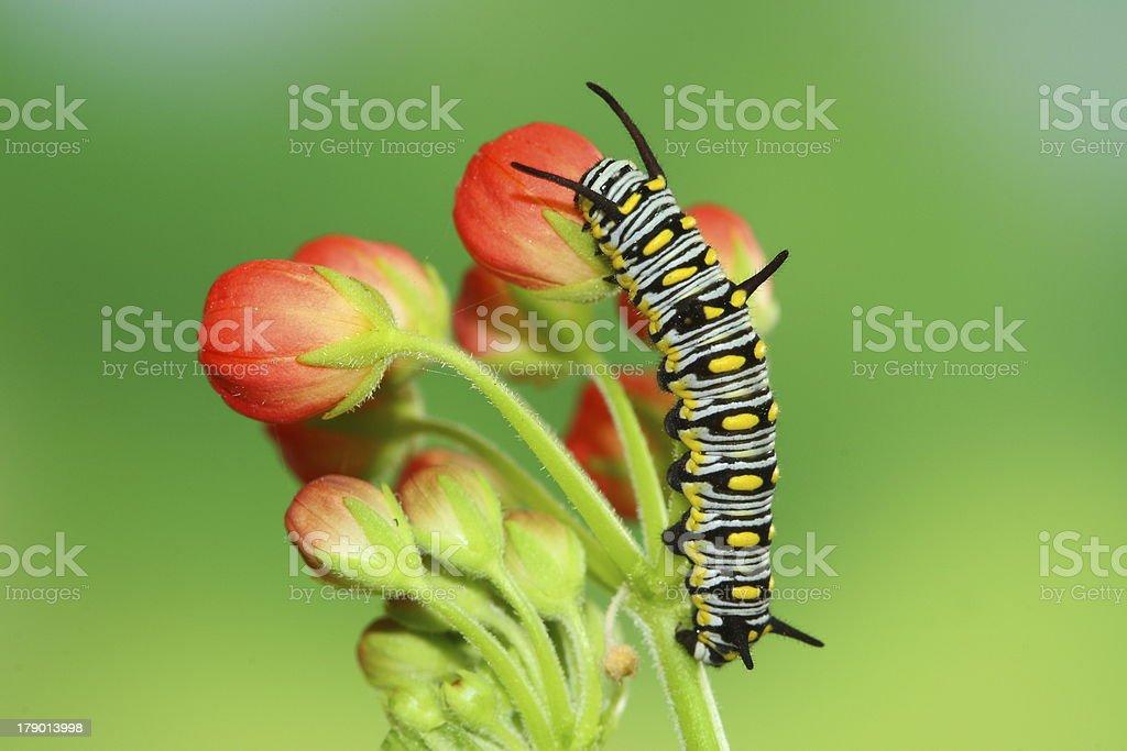 cute caterpillar stock photo
