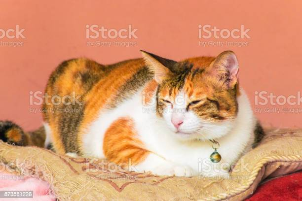 Cute cats are sleeping in the house using wallpaper or background picture id873581226?b=1&k=6&m=873581226&s=612x612&h=wqn0vk5p6e509ofwj4fcjc9i47ki1nvftvcpdl413ww=