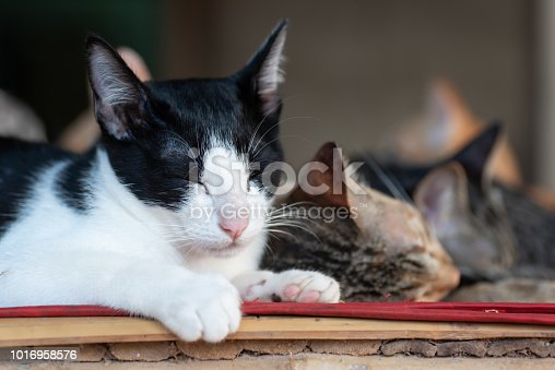 Cute cats are sleeping together on the mat, pet at home