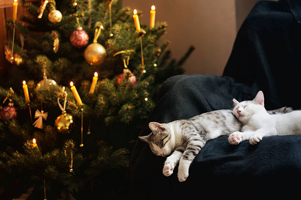 Niedliche Katzen vor Weihnachtsbaum – Foto