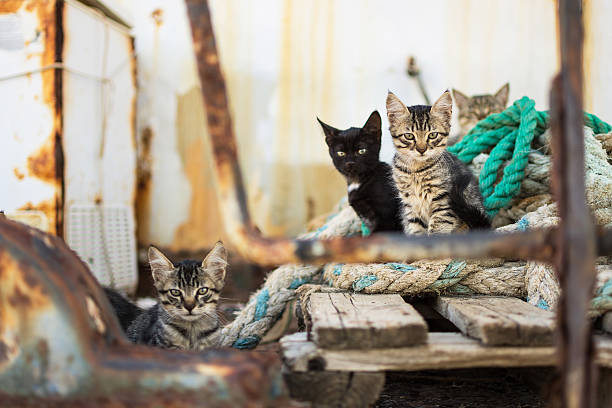 Cute cats on old wooden pallet and worn ropes picture id590265890?b=1&k=6&m=590265890&s=612x612&w=0&h=pwjzpnlep4sqjuoajup zzoajqzk3ztgqsrkxnlixgq=