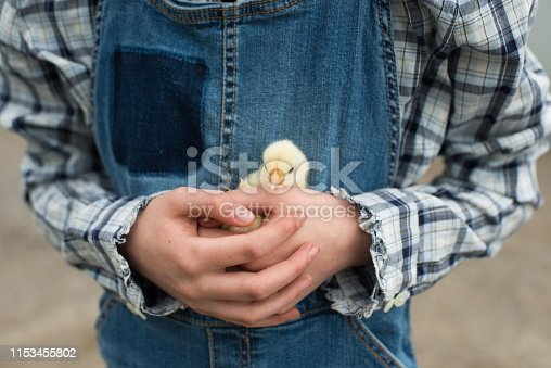 Close up of a small baby chicken being held by a child.