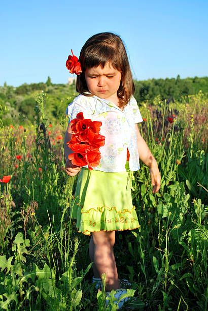 cute child collecting poppies stock photo