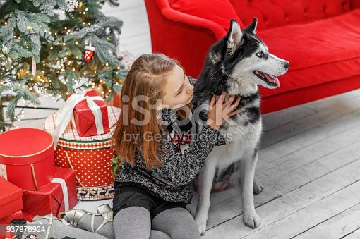 cute child girl in a christmas interior with a husky dog stock photo more pictures of animal istock