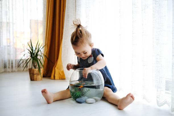 Cute child is feeding his goldfish picture id1186918317?b=1&k=6&m=1186918317&s=612x612&w=0&h= sunckbue1id4mfco4acbz dm 9zbynshwdlxnjkpzq=