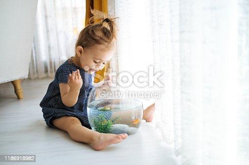 109350576 istock photo Cute child is feeding his goldfish 1186918982