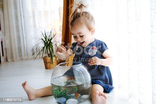 109350576 istock photo Cute child is feeding his goldfish 1186975725